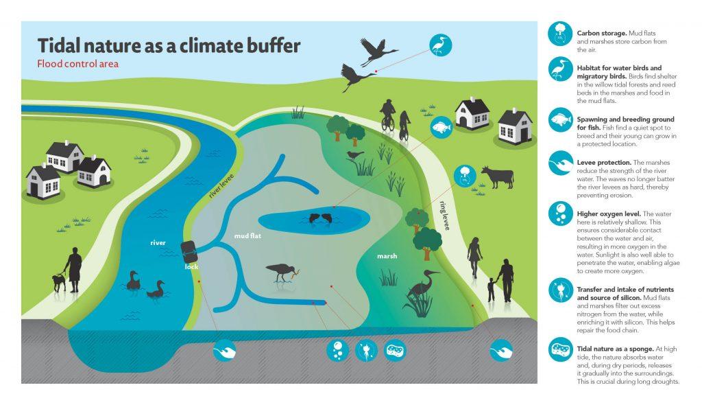 Tidenatur robustes und belastbares Ökosystem,